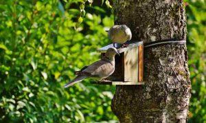 piccioni balcone metodo