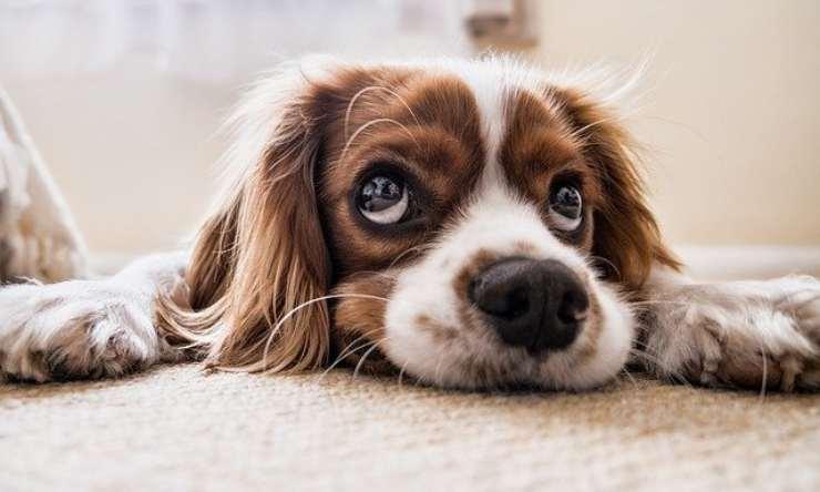 Amici a quattro zampe: quali sono i cibi che non dovremmo mai dare ai nostri cani