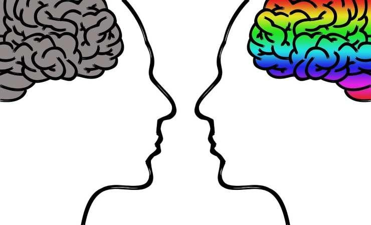 cervello alimento