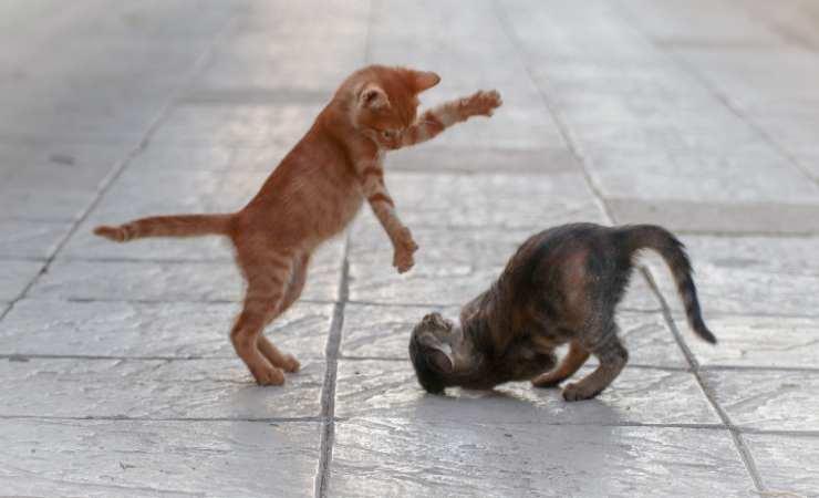 coda gatto abbassata attenzione