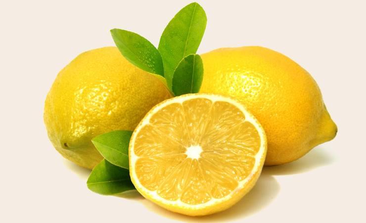 foglie gialle limone piante