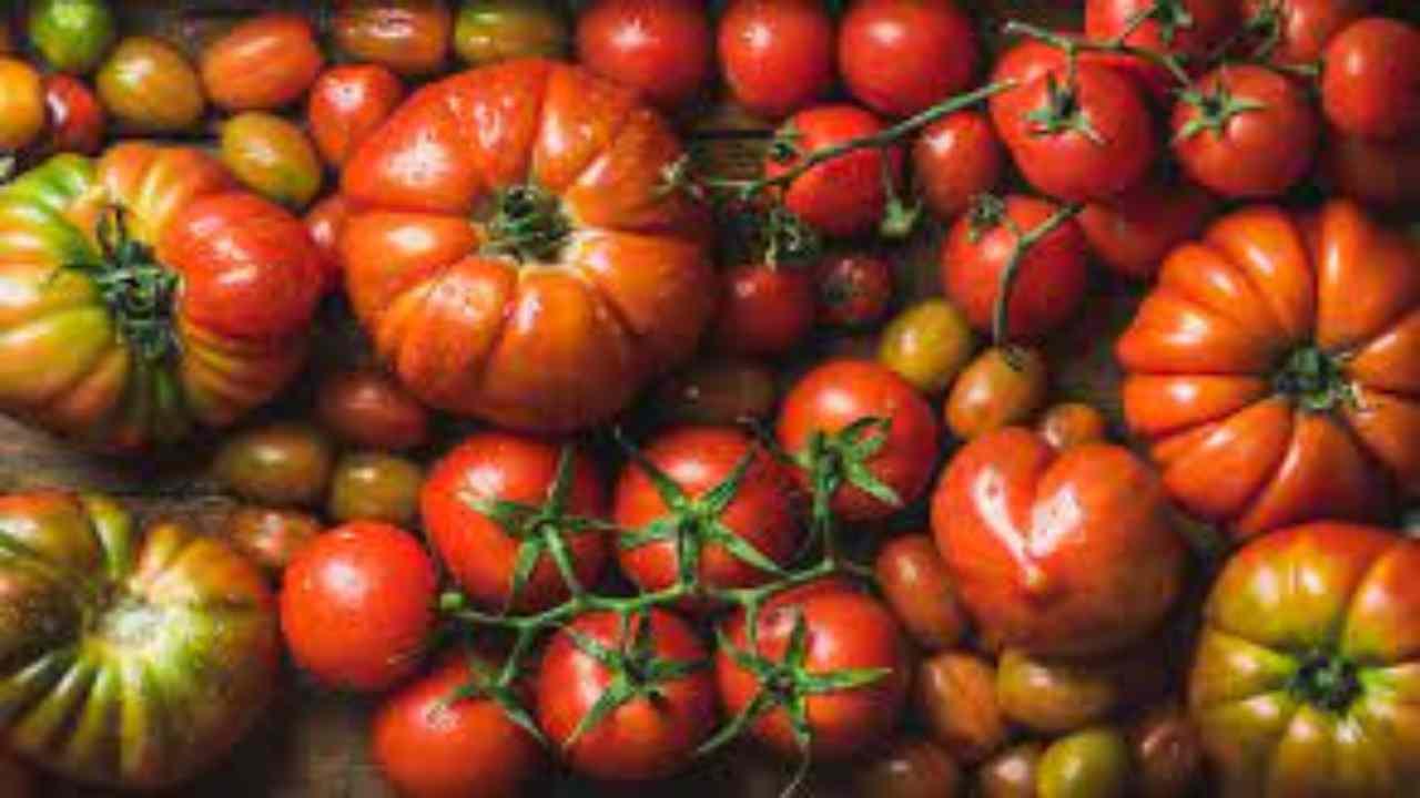 Pomodori-Nome-AltraNotizia